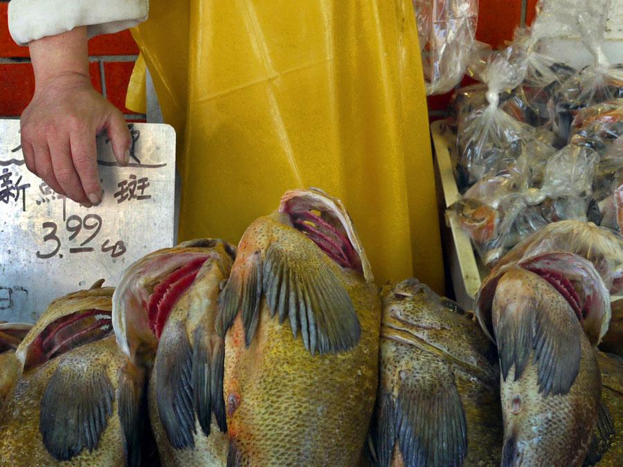 Fish Market, 2009